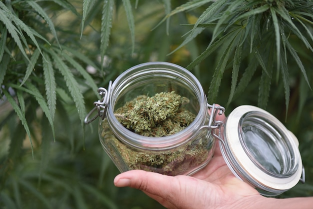 Glazen pot met cbd-bloemen