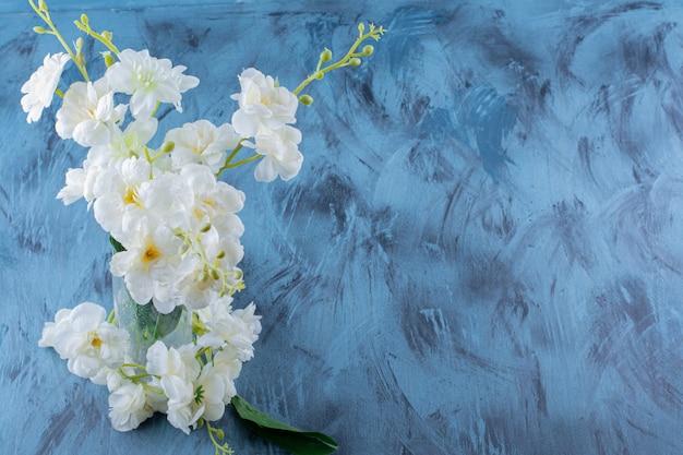 Glazen vaas met witte natuurlijke bloemen op blauw.