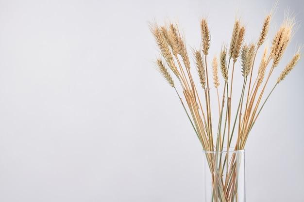 Glazen vaas van droge tarwe rogge spikelets geïsoleerd op een witte achtergrond