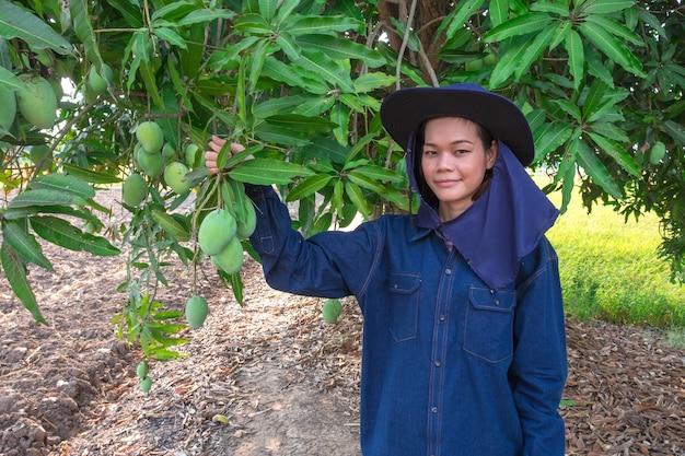 Glimlach jonge aziatische landbouwersvrouw het plukken mangofruit in landbouwbedrijf