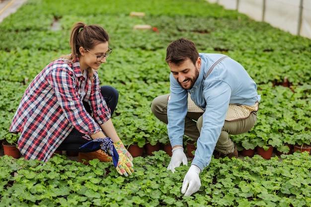 Glimlachend paar gehurkt in kas en het verzorgen van jonge boompjes