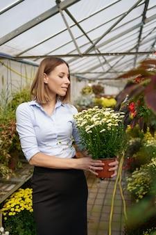Glimlachende gelukkige bloemist in haar kwekerij staande met potchrysanten in haar handen terwijl ze de tuinplanten in de kas neigt