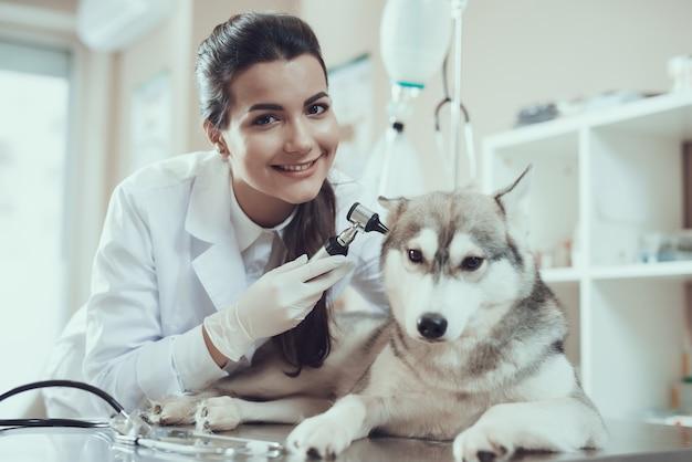 Glimlachende meisjesdierenarts met otoscoop en husky