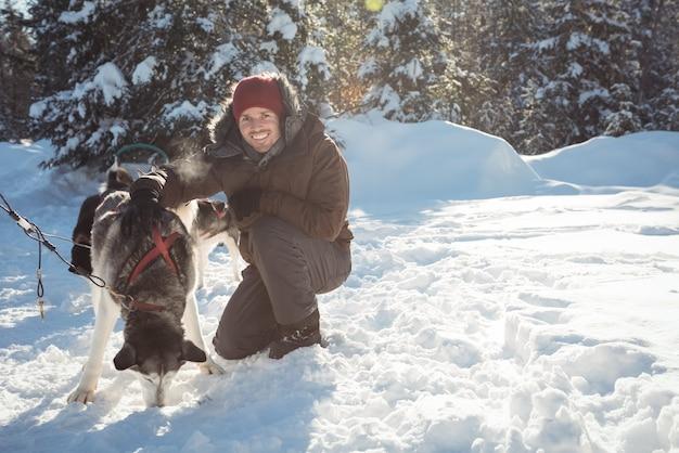 Glimlachende musher die huskyhonden aan de slee koppelt
