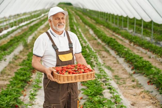 Glimlachende senior man met rijpe, sappige aardbeien