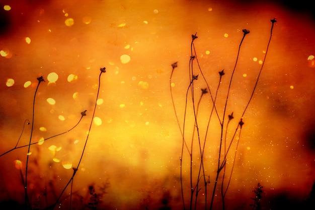 Gloeiende zonsondergang met planten