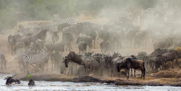 Gnoes die in mara river springt. grote migratie. kenia. tanzania. masai mara nationaal park.