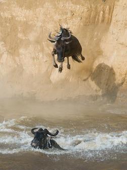 Gnoes die in mara river springt