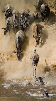 Gnoes rennen naar de mara-rivier