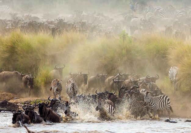Gnoes steken de mara-rivier over. grote migratie. kenia. tanzania. masai mara nationaal park.