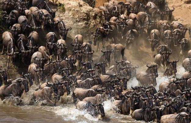 Gnoes steken de mara-rivier over. grote migratie. kenia. tanzania. nationaal park masai mara.