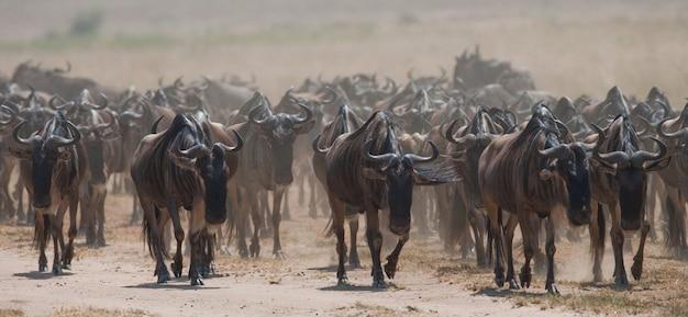 Gnoes volgen elkaar in de savanne. grote migratie. kenia. tanzania. nationaal park masai mara.