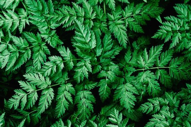 Goed groen blad. landbouwgebied waarop kruiden groeien.