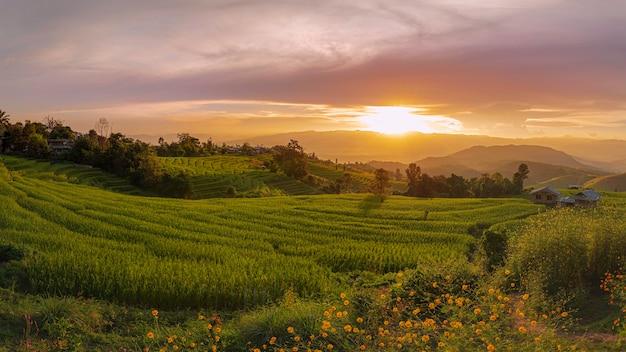 Goed moment en goede tijd rijst stap boerderij met schemering ban pa bong piang landmark meajam stad chiangmai, thailand