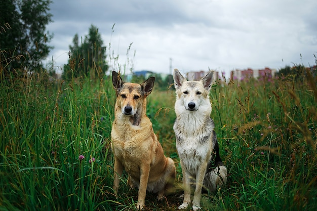 Goed opgevoede gehoorzame bruine en grijze honden van gemengd ras die samen op groen gras zitten