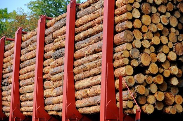 Goederentrein geladen met dennenboomstammen