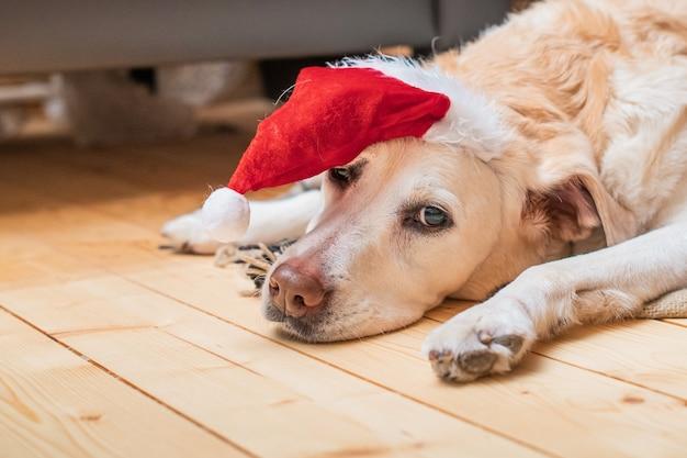 Golden labrador retriever in een kerstmuts ligt op een deken in een houten huis bij een brandende open haard