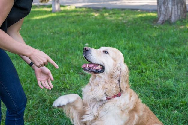 Golden retrieverhond geeft een poot aan een meisje