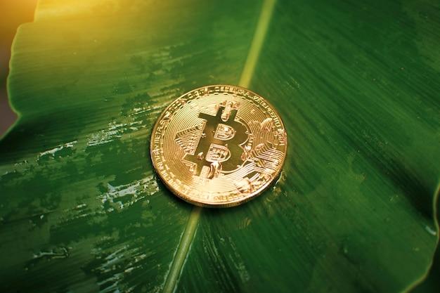 Gouden bitcoin met waterdruppels geplaatst op een groene bladachtergrond, cryptocurrency virtueel geld en blockchain-technologieconcept