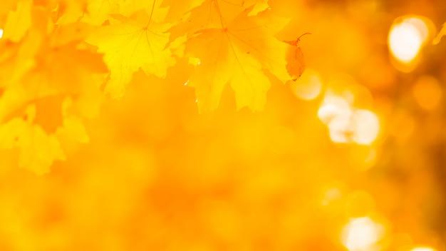 Gouden bladeren in de herfstpark