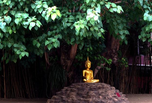 Gouden boeddhabeeld onder de boom.
