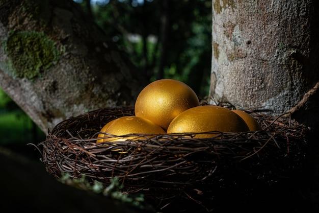 Gouden eieren in een nest aan de boom