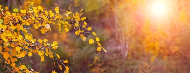Gouden herfst in het bos. boomtak met gele herfstbladeren in het herfstbos tijdens zonsondergang in warme herfsttinten