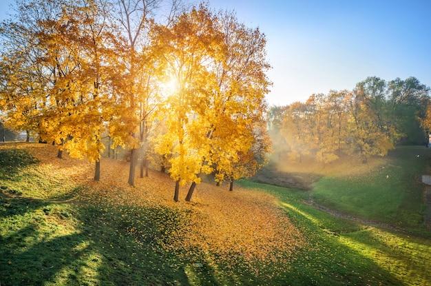 Gouden herfstbladeren op bomen en gras in het ravijn van tsaritsyno-park in moskou en de stralen van de ochtendzon door de takken