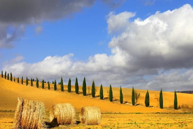 Gouden heuvels van toscane.