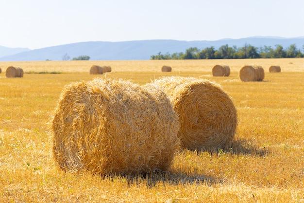Gouden hooibalen in platteland