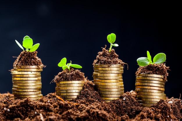 Gouden munten in de bodem met jonge plant. geld groei concept.