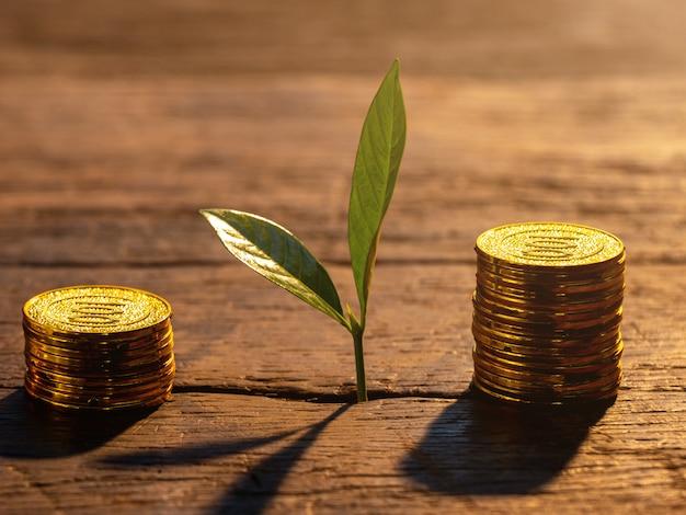 Gouden munten met jonge plant