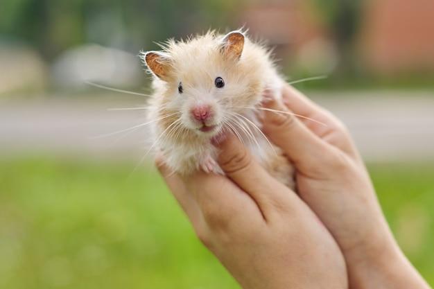 Close-up beeld van schattig klein meisje met een hamster   Gratis Foto