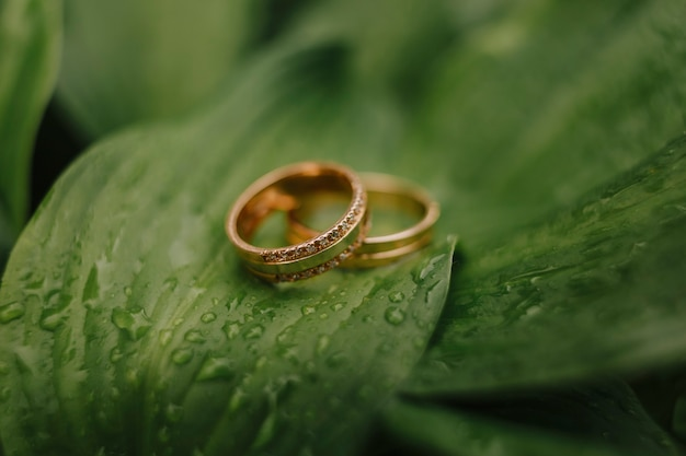 Gouden ringen op groene bladeren, trouwringen, close-up