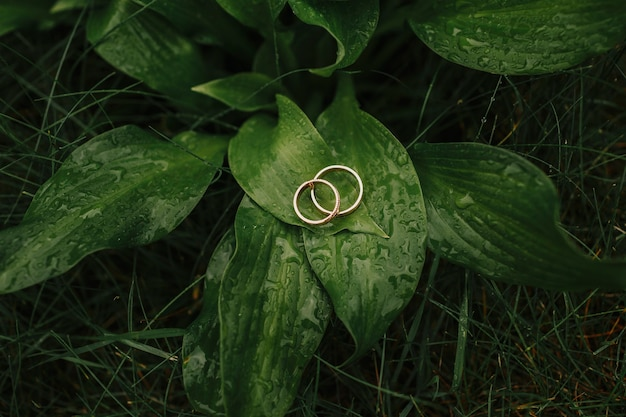 Gouden ringen op groene bladeren, trouwringen