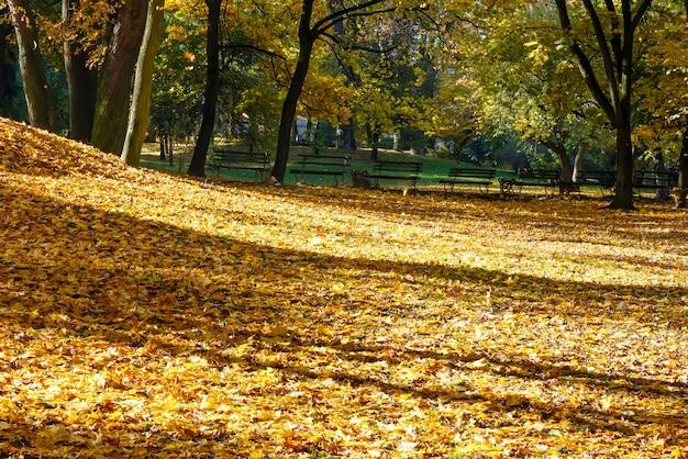 Gouden tapijt van herfstbladeren met schaduw van bomen in stadspark.