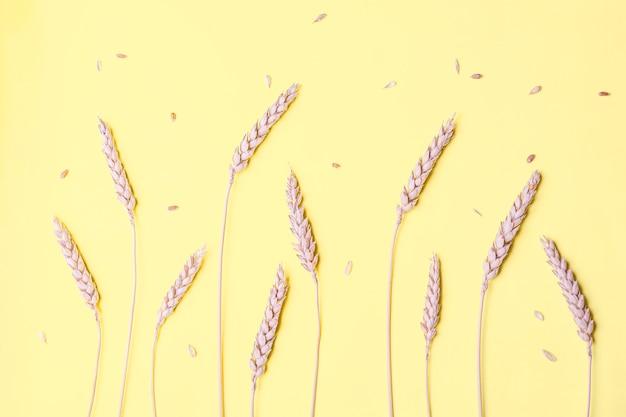 Gouden tarwe en rogge oren, droge granen aartjes op geel