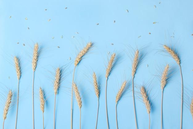 Gouden tarwe en rogge oren, droge granen aartjes op licht