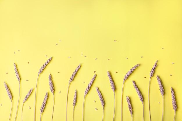 Gouden tarwe en roggeoren, droge graangewassenaartjes in rij op geel