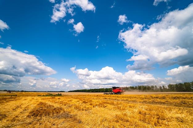 Gouden tarwegebied en blauwe hemel, landschap van landbouwgraangewassen in oogstseizoen