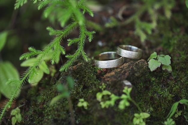 Gouden trouwringen op groen mos in bos