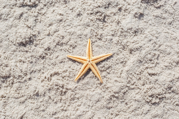 Gouden zeester op een zandstrand. bovenaanzicht, plat gelegd.