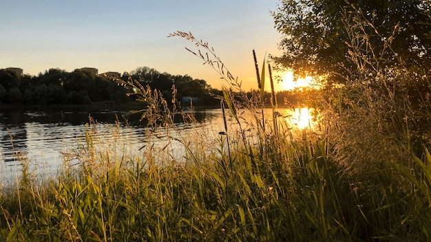 Gouden zomerzonsondergang over rivier