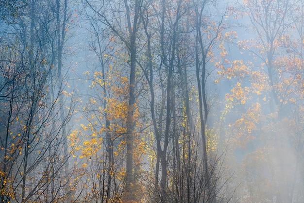 Gouden zonnestralen dringen door de bomen op de vroege, mistige herfstochtend.