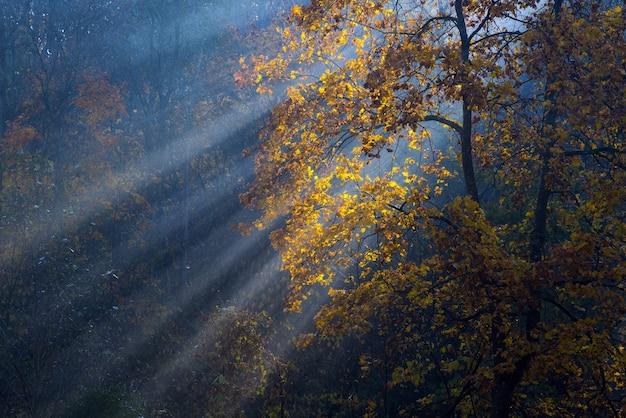 Gouden zonnestralen dringen door de bomen op vroege, mistige herfstochtend