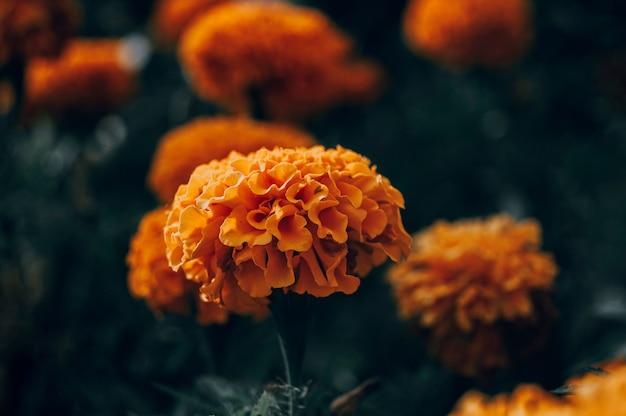 Goudsbloemen groeien in het park