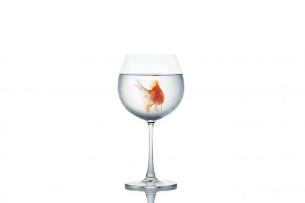 Goudvis die in een wijnglas drijft op wit