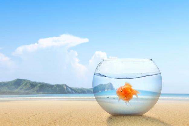 Goudvis in de vissenkom op het zandstrand