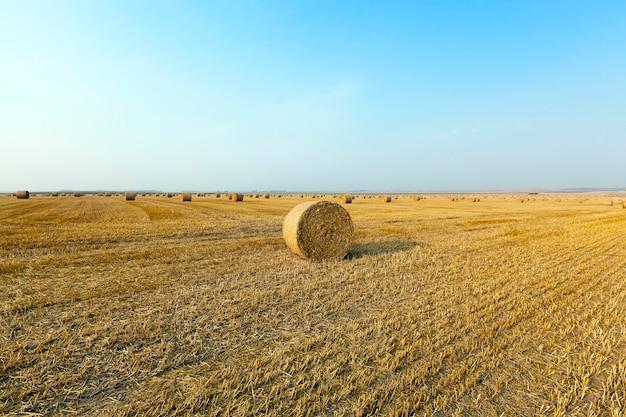 Graan landbouw veld landbouw veld waarop het oogsten van granen, tarwe.
