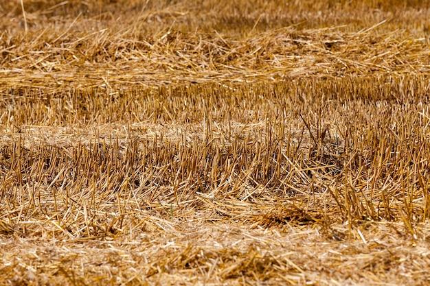 Graan landbouw veld